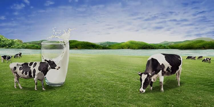 Goala Dairy Private Limited Image